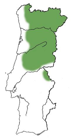 Cerejeira Brava