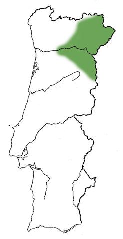 CerejeiraSantaLucia4