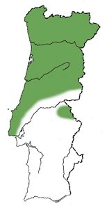 Aveleira1