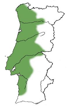 Loureiro3